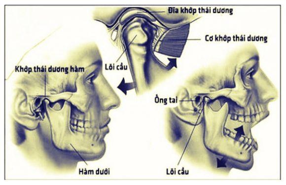 Khớp thái dương hàm